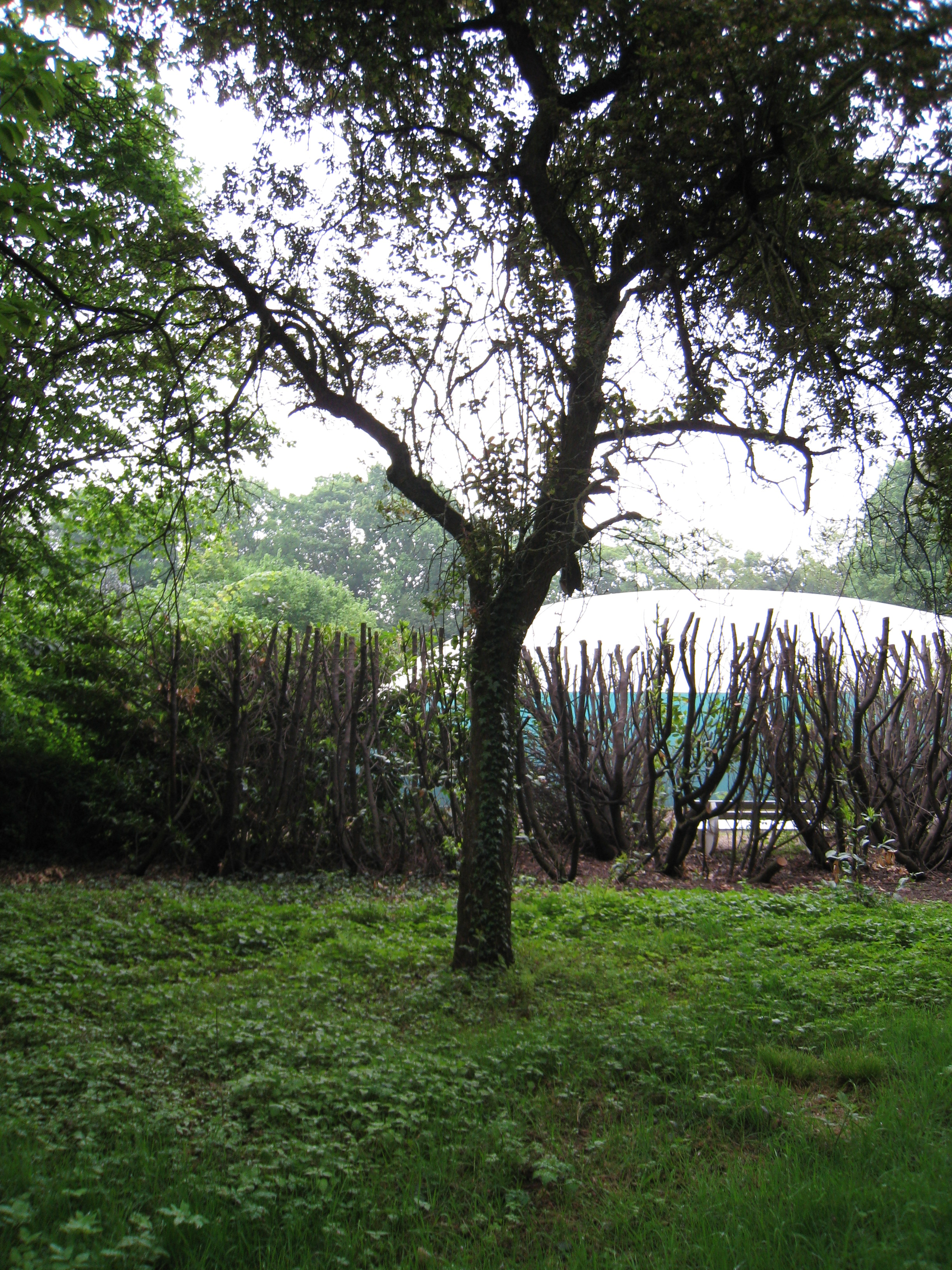 Pommier du Japon – Bruxelles, Parc Solvay Sports, Avenue du Pérou, 80 –  28 Avril 2011