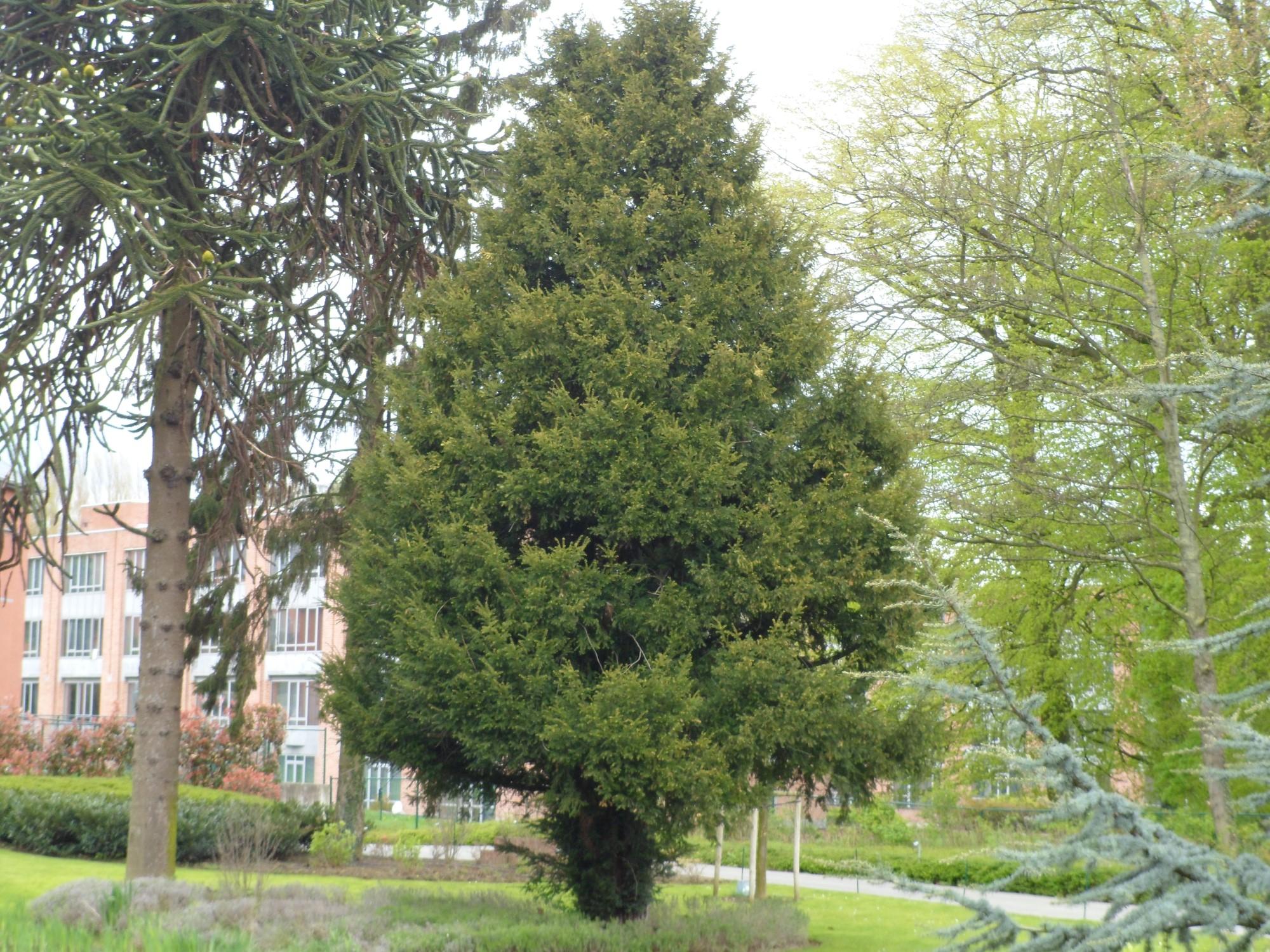 If commun – Molenbeek-Saint-Jean, Chaussée de Ninove, 1005 –  23 Avril 2012