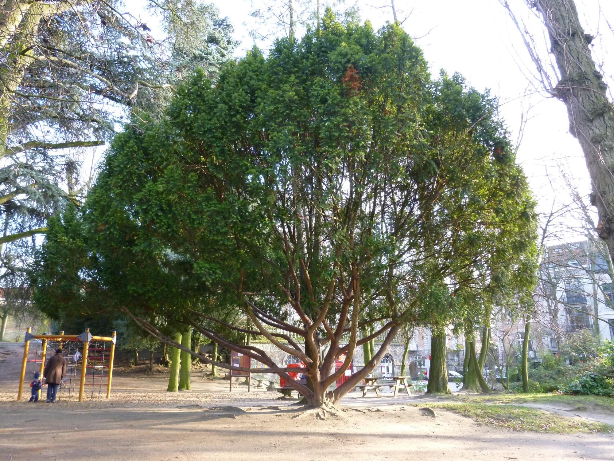 If commun – Ixelles, Parc Jadot, Rue du Bourgmestre –  11 Décembre 2012