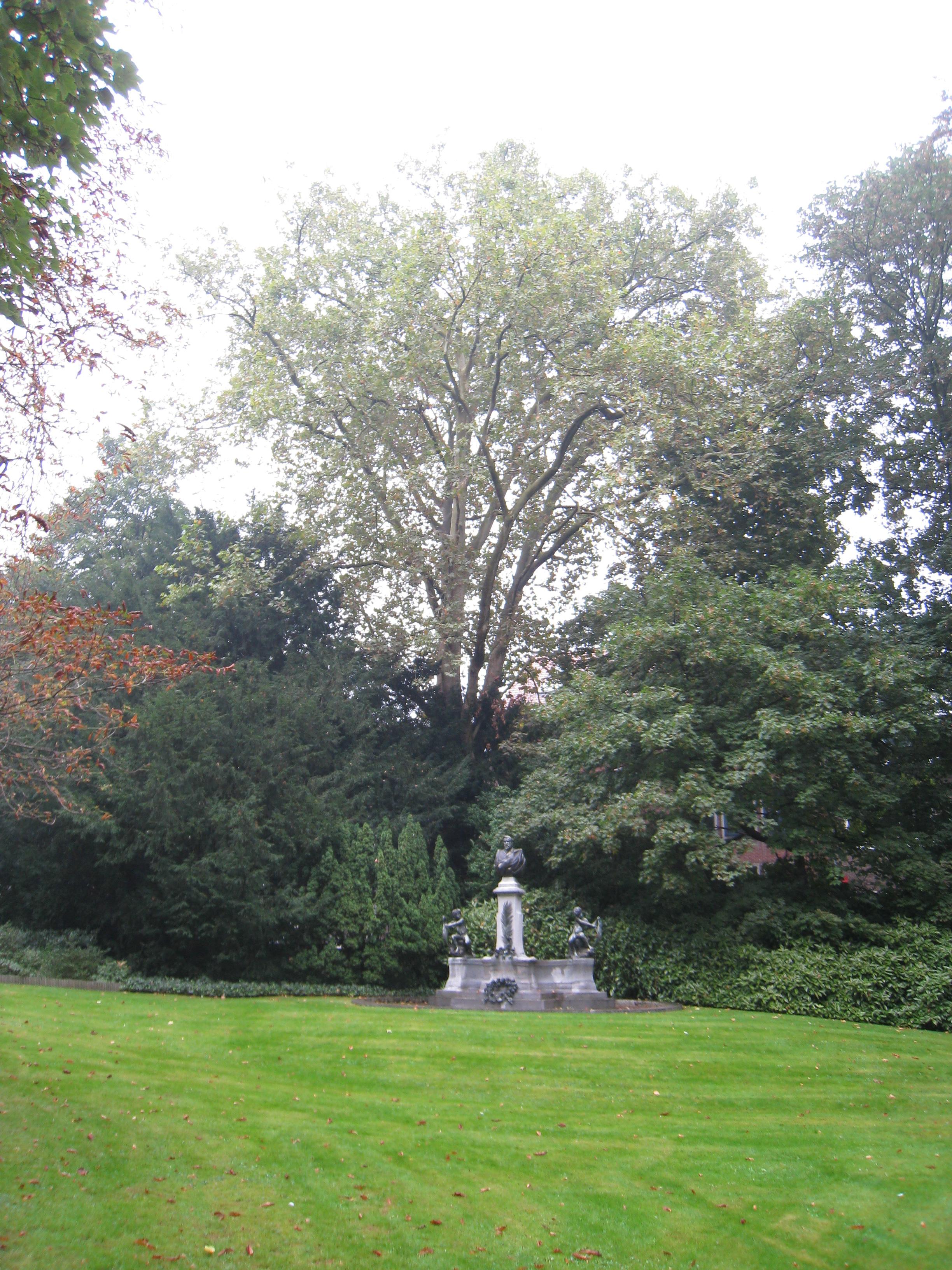 Platane à feuille d'érable – Ixelles, Parc Solvay, Rue des Champs Elysées, 43 –  24 Septembre 2014