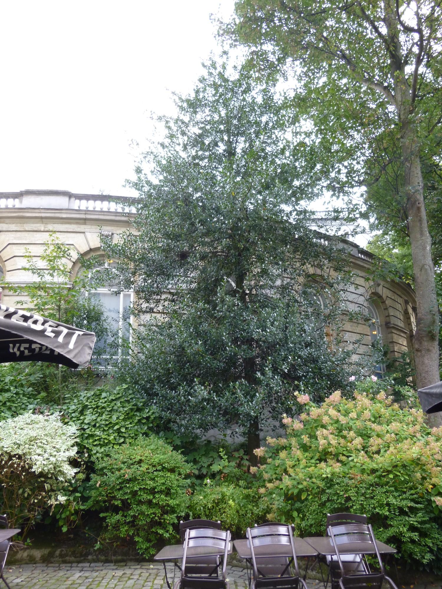 houx – Bruxelles, Place des Palais, 7 –  25 Septembre 2014
