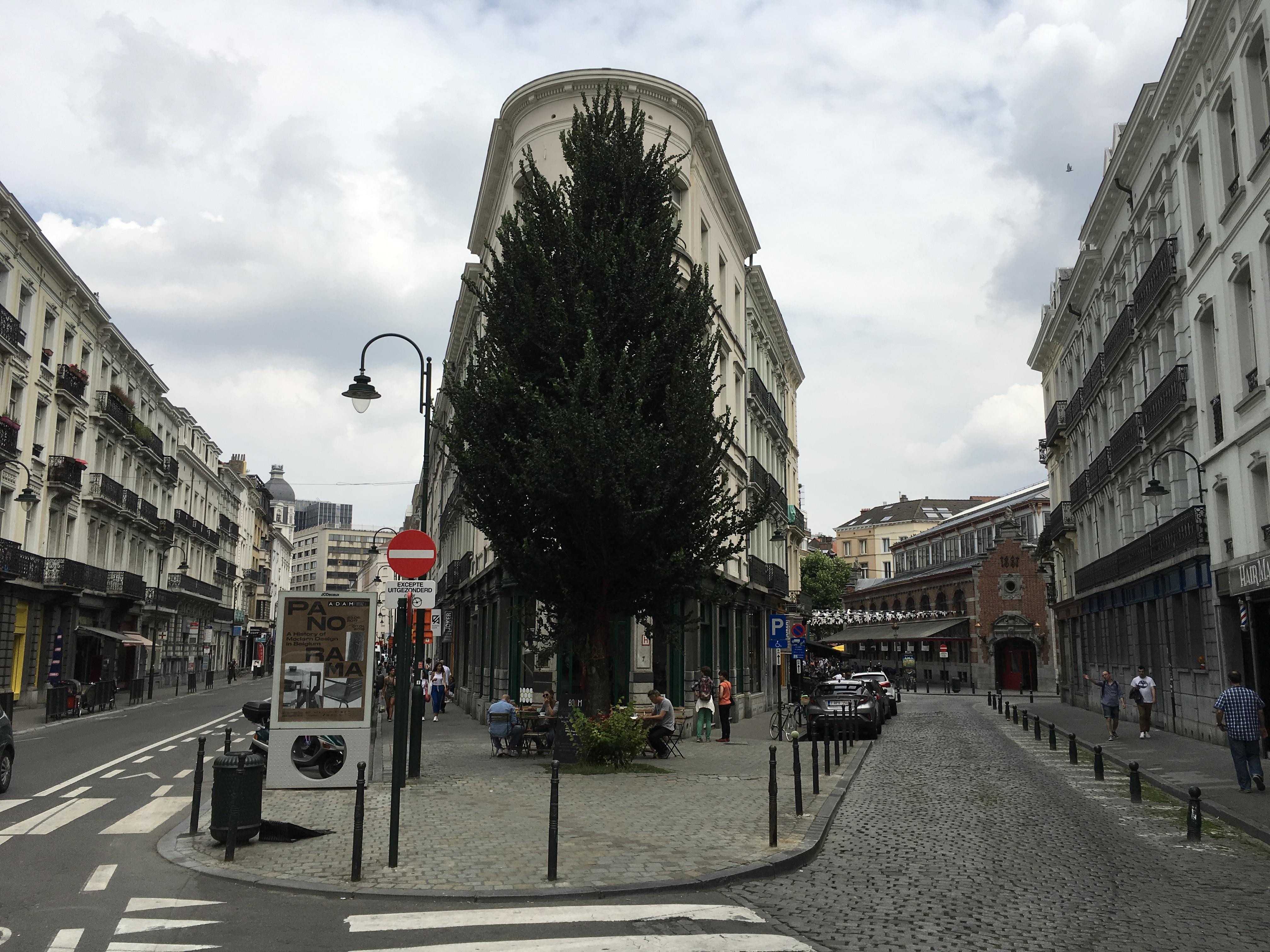 Orme fastigié – Bruxelles, Rue Pletinckx, 7 –  10 Juillet 2017