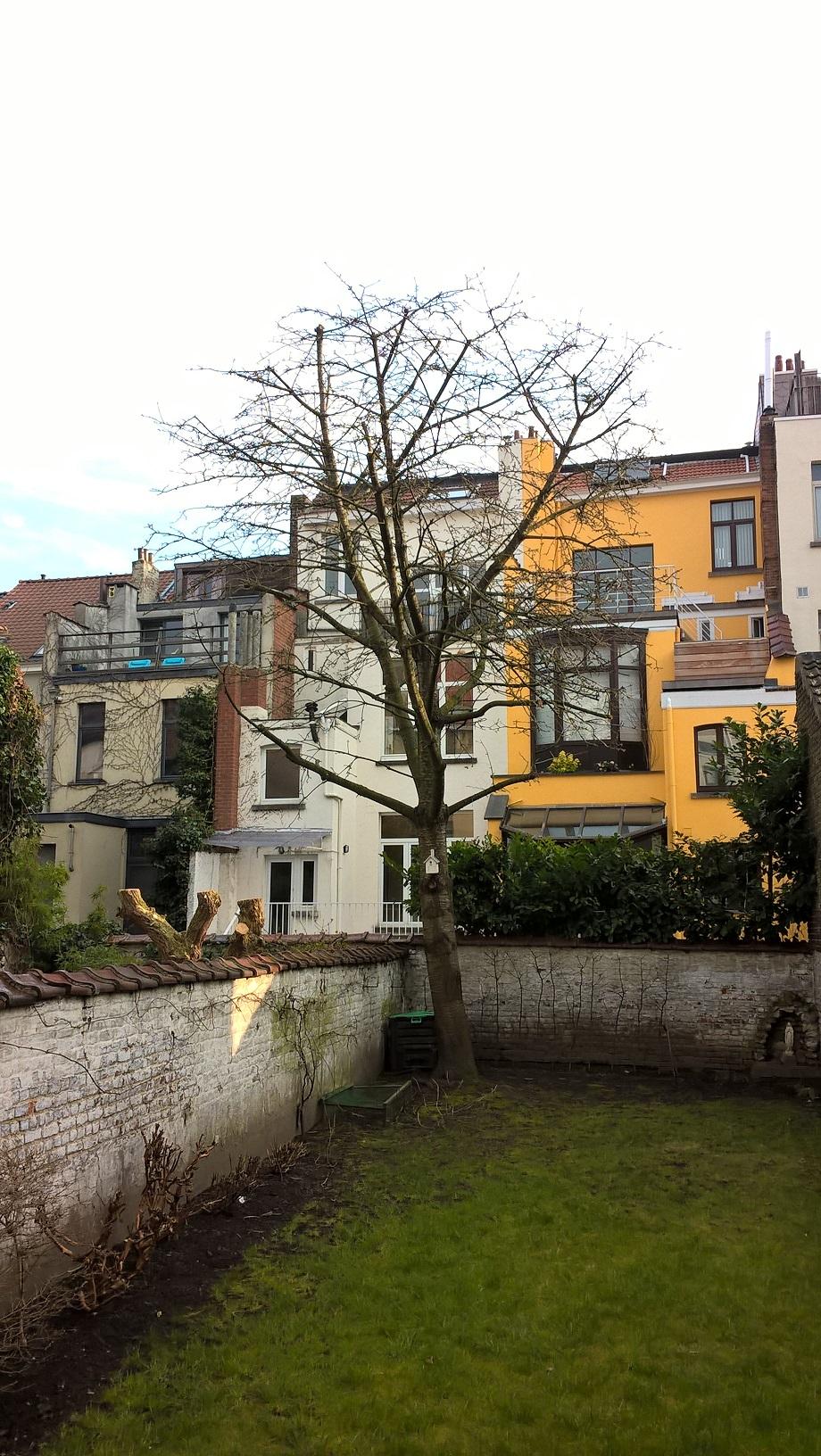 Prunus sp – Schaerbeek, Rue Victor Hugo, 44 –  27 Mars 2018