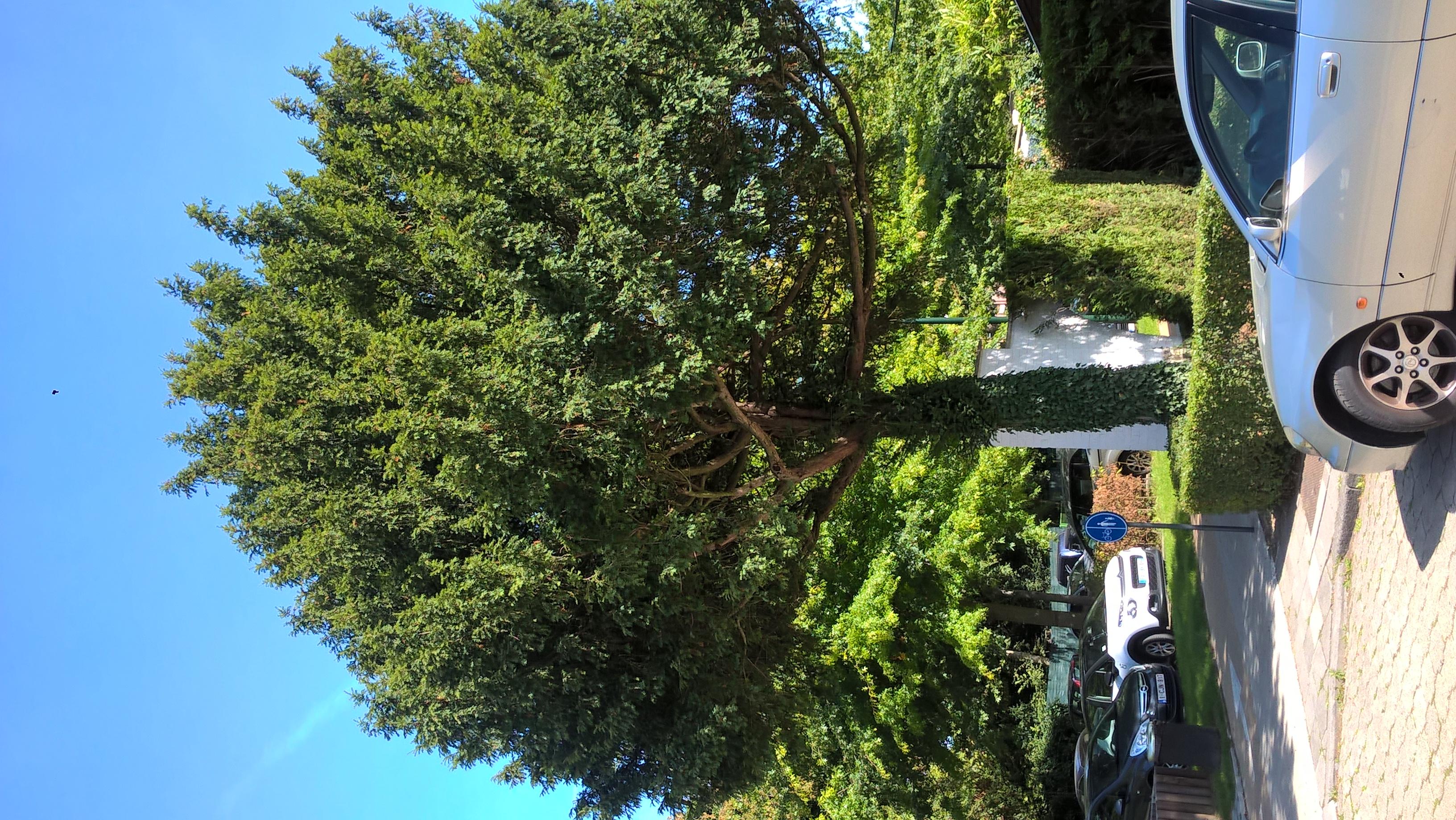 Venijnboom – Ukkel, Van Beversquare, 61 –  11 September 2018