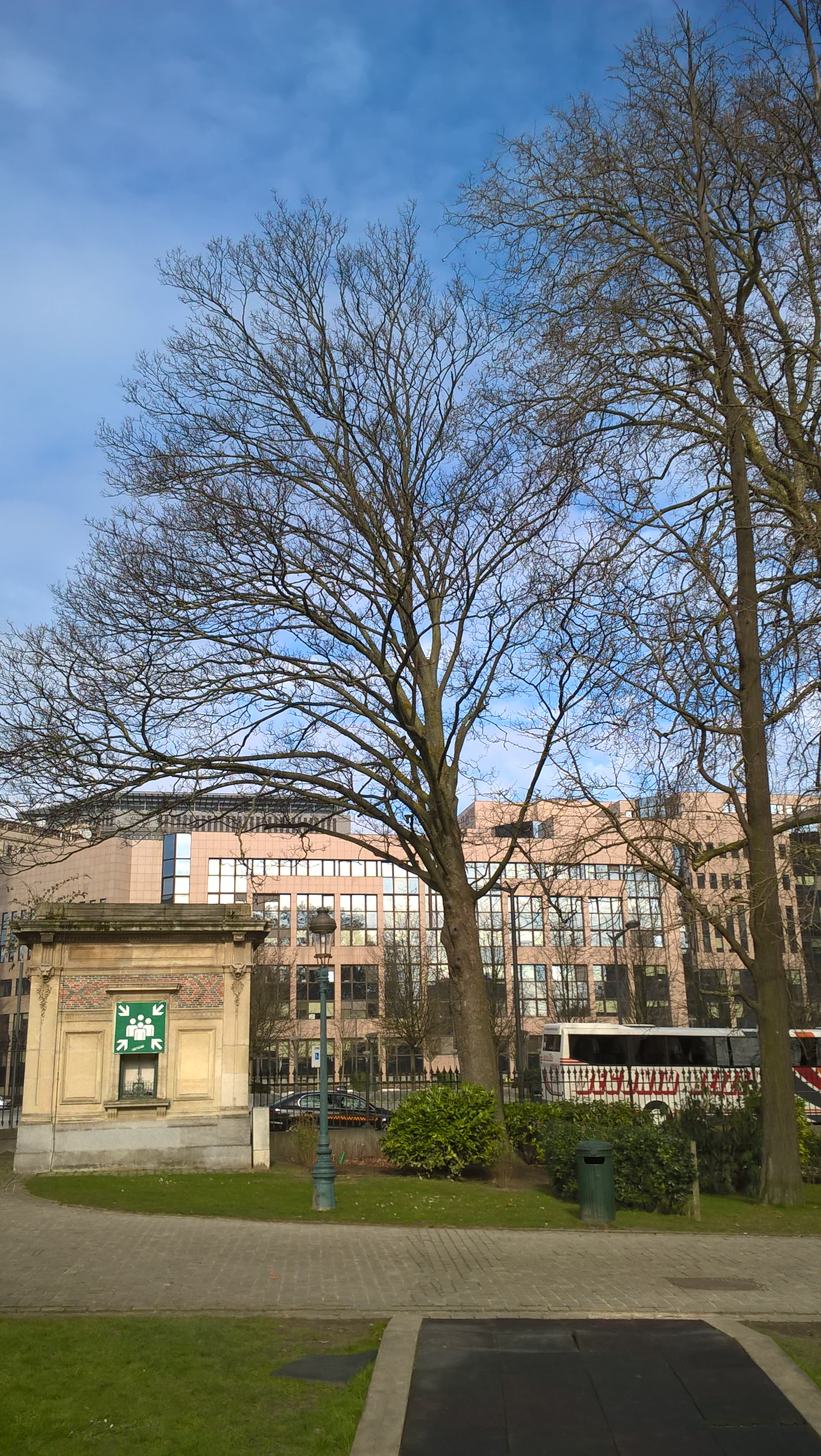 Erable sycomore – Bruxelles, Parc Léopold –  09 Mars 2016