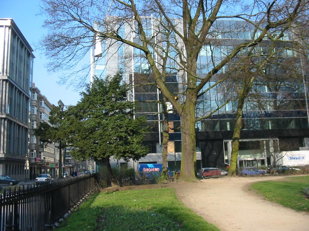 Erable plane – Bruxelles, Square de Meeûs sur Ixelles –  15 Mars 2007